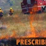 PrescribedBurn_Stock