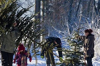 christmas-tree-permit-2