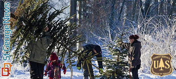 Where, how to get Christmas tree cutting permits for Utah's national  forests – St George News - Where, How To Get Christmas Tree Cutting Permits For Utah's National