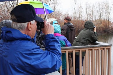 Birdwatchers surveying the pond next to the Tonaquint Nature Center, Jan. 30, 2015 | Photo by Leanna Bergeron, St. George News