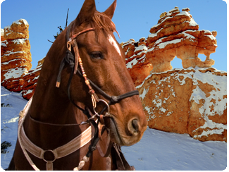 Ruby's Inn offers winter horseback rides through the Grand Staircase. Reservations required 48-hours in advance. Bryce Canyon, Utah, circa 2015 | Photo courtesy of Ruby's Inn, St. George News