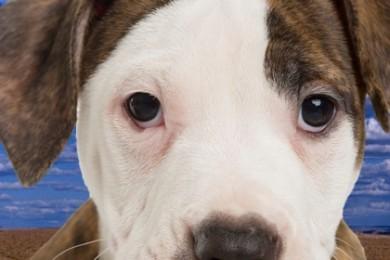 New Utah law prohibits dog discrimination – St George News
