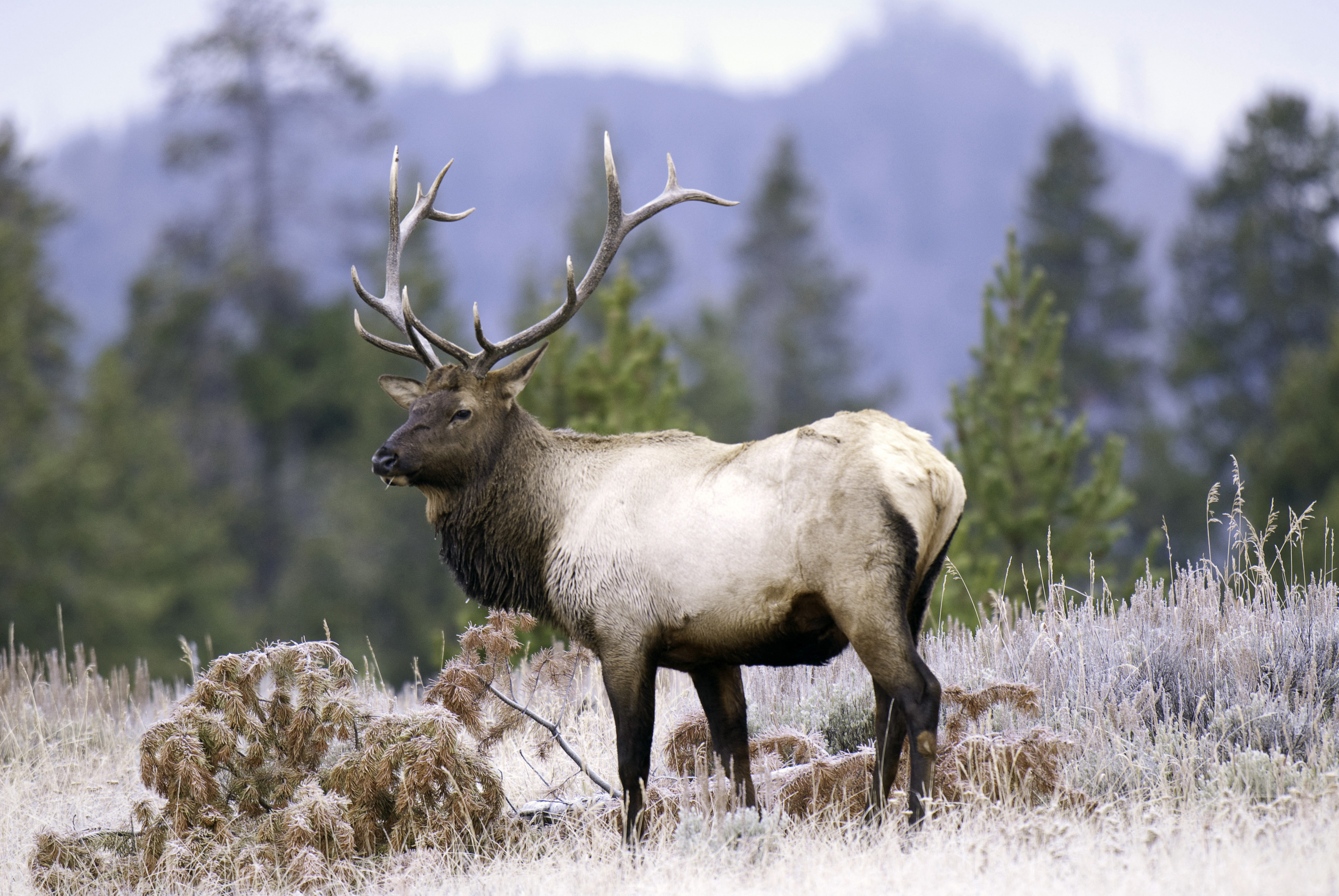 Division of wildlife opens application period for big game for Utah non resident fishing license