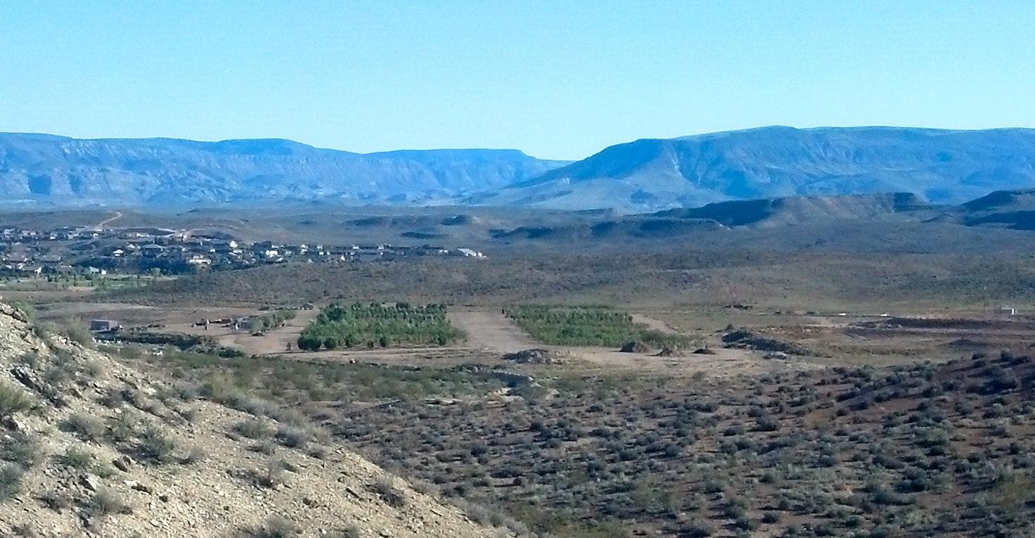 City of St. George tree farm before winter, St. George, Utah, October 17, 2013 | Photo by Joyce Kuzmanic, St. George News