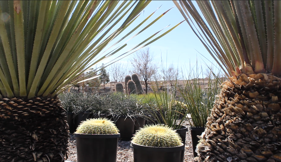 A Variety Of Cactus And Other Plants At Star Nursery St George Utah