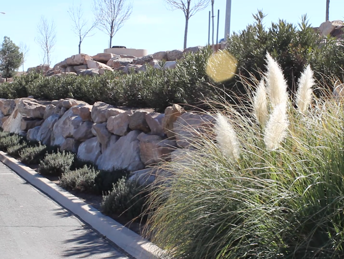 Shrubs Outside Of Star Nursery St George Utah Feb 17 Plants