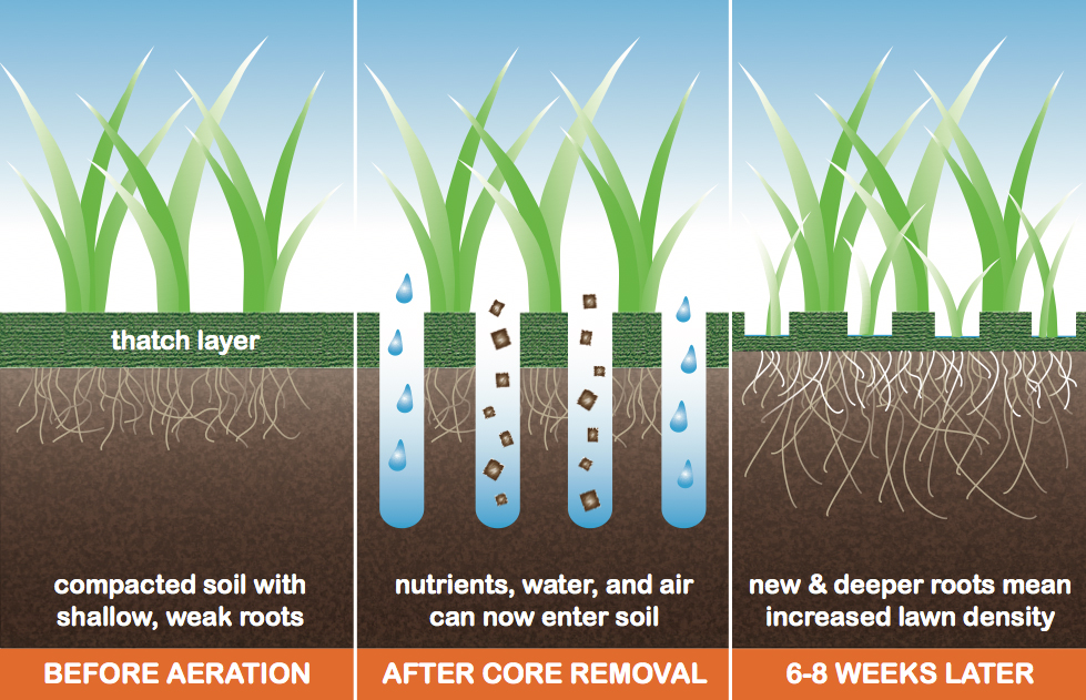 Image Result For Aeration And Overseeding