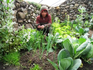 """Children of the Japù, Cochamarca, and Yanaruma Q'ero communities enjoy tending the vegetables in their new family greenhouses funded by the Heart Walk Foundation """"Grow A Mountain Garden"""" Campaign, Andes Mountain, Peru, undated   Photo courtesy of the Heart Walk Foundation, St. George News"""