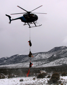 Helicopter Wildlife Services dropping off three mule deer does for fawn survival study, Angle staging area, Angle, Utah, March 1, 2015 | Photo by Carin Miller, St. George News