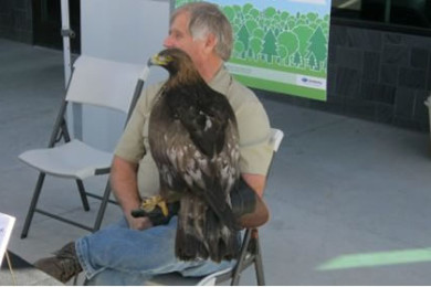 Martin Tyner of the Southwest Wildlife Foundation sits with Scout, a golden eagle, March 27, 2015 | Photo by Ric Wayman, St. George News