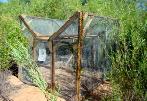 Cowbird trap used by the Utah Division of Wildlife Resources, St. George, Utah, undated   Photo courtesy Utah Division of Wildlife Resources, St. George News  