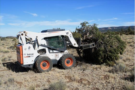 An agra-axe during and after removal of a conifer tree as part of grassland restoration