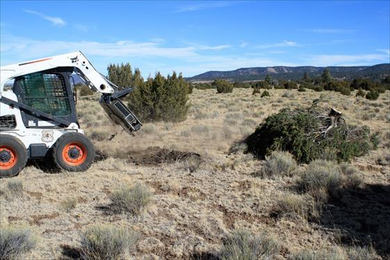 An agra-axe after removal of a conifer tree as part of grassland restoration, Kaibab National Forest, date unspecified | Photo courtesy of the National Forest Service, St. George News