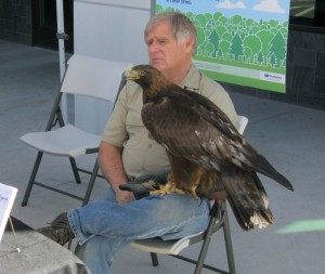 Martin Tyner of the Southwest Wildlife Foundation sits with Scout, a rescued golden eagle, March 27, 2015 | Photo by Ric Wayman, St. George News