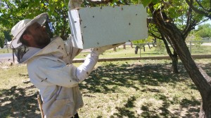 Beekeeper Casey Lofthouse captures a swarm of bees, photo undated | Photo courtesy of Casey Lofthouse, St. George News