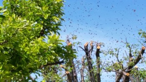 A swarm of bees flying, undated | Photo courtesy of Casey Lofthouse, St. George News