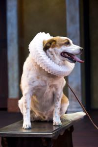 "Dog plays Crab in the production ""The Two Gentleman of Verona"", Cedar City, Utah, undated 