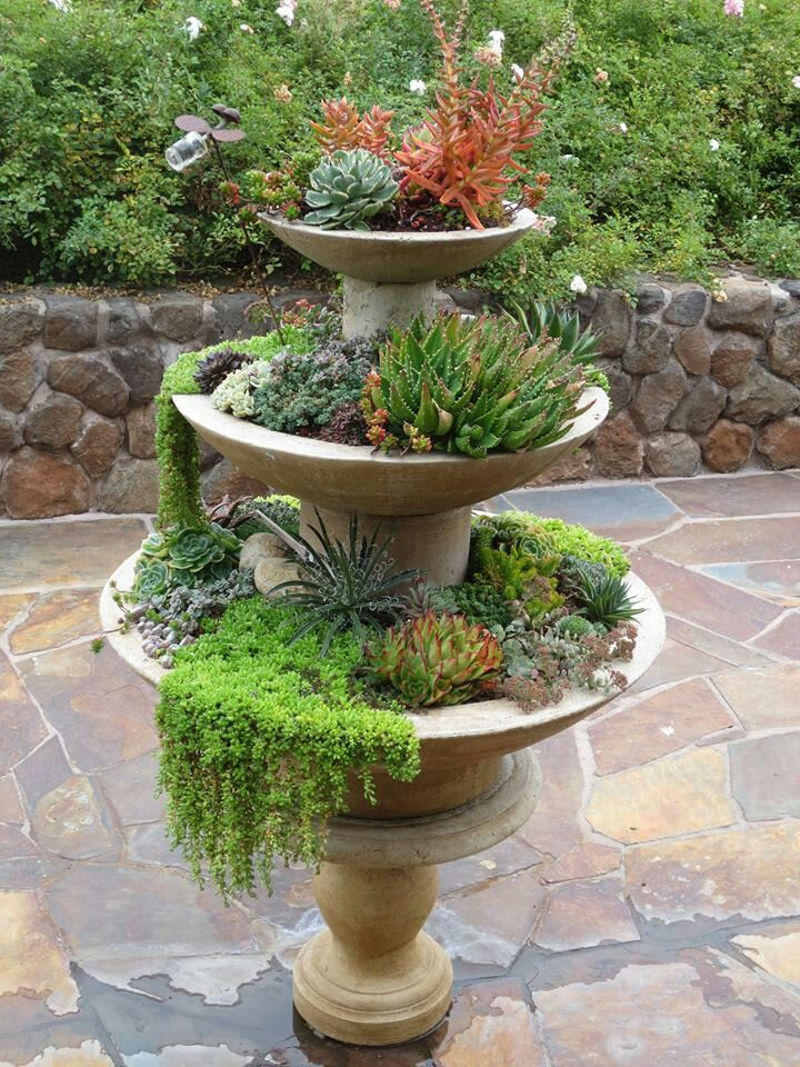 Dixie Garden Club Hosts Cactus And Succulent Tour St