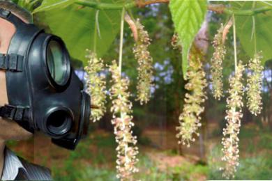 tree-allergy