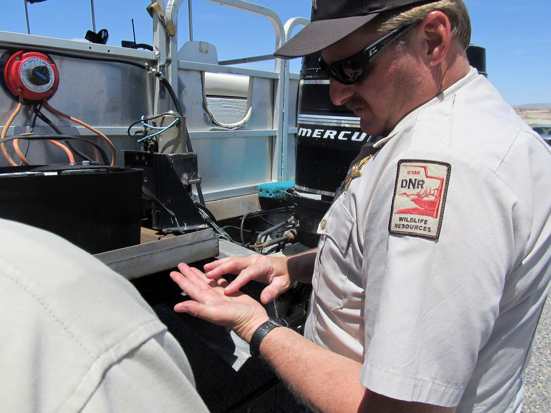 Division of Wildlife Resources Lt. Scott Dalebout examines a dead quagga mussel found on a boat at a watercraft checkpoint on U.S. Highway 89 near Big Water, Utah, May 15, 2015 | Photo by Heather Talley, courtesy of DWR, St. George News