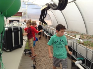 Children from Mrs. Rindlisbacher's first grade class explore the greenhouse at Crimson View Elementary, St. George, Utah, May 13, 2015 | Photo by Hollie Reina, St. George News