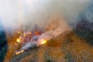 The Mt. Emma Fire has burned more than 2,000 acres, Arizona Strip, Arizona, June 25, 2015 | Photo courtesy Alan Syphus, Bureau of Land Management Arizona Strip, St. George News