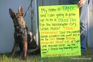 Tank, Washington City's next police dog, date and location unspecified | Photo courtesy of Havoc K-9, St. George News