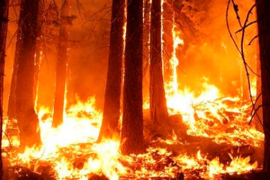 wildfire-prevention-2