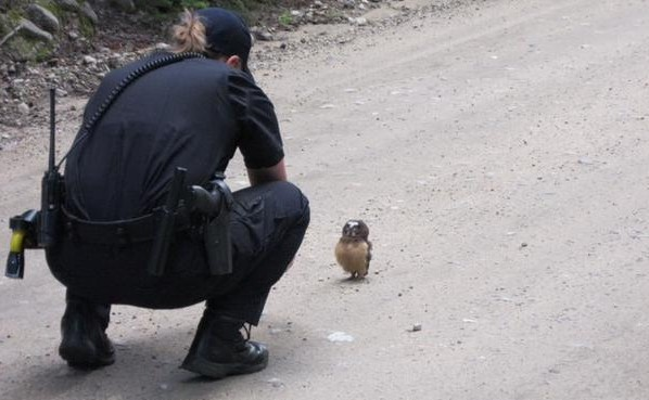 Boulder County (Colorado) Sheriff's Deputy Sophie Berman crouches over a small owl, making a brief video before the bird flew away. Berman came across the raptor on a dirt road as Berman patrolled the area, near Rainbow Lakes, outside Nederland, Colorado, July 21, 2015 | AP Photo courtesy of the Dan Walter/Boulder County Sheriff's Office, St. George News