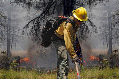 Image combines two photos: In the foreground, a firefighter does prep work for managed fire, in the background is a low intensity managed fire, Kaibab National Forest, Williams Ranger District, Arizona, on July 19 and 18, 2015 | Photo courtesy of Kaibab National Forest re Springs Fire, St. George News