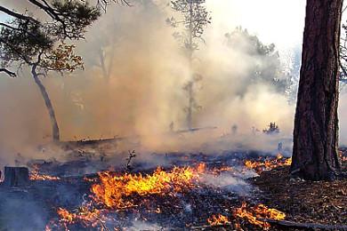 tusayan-ranger-district-fire-1