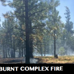 Burnt Complex fire growth inside the 3,915-acre planning-area boundary, Kaibab National Forest, Arizona, July 18, 2015 | Photo by David Hercher, courtesy of the U.S. Forest Service, Southwestern Region; St. George News