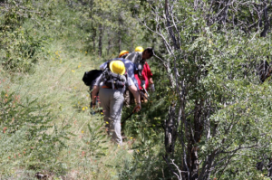 Volunteers participating in trail brushing, one form of trail maintenance,  in Saddle Mountain Wilderness, Kaibab National Forest, Aug. 16, 2015 | Photo courtesy of the U.S. Forest Service, St. George News