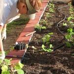 Community garden | Stock photo, St. George News