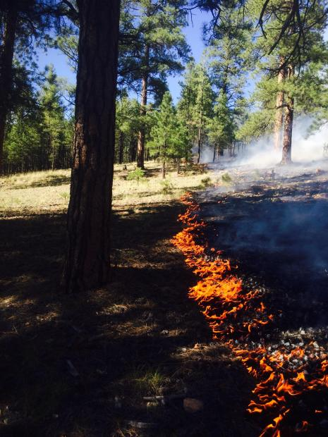 Rock Fire, Kaibab National Forest  Tusayan Ranger District, Arizona, Aug. 4, 2015   Photo by Brandon Oberhardt. courtesy of the U.S. Forest Service, Southwestern Region, Kaibab National Forest; St. George News