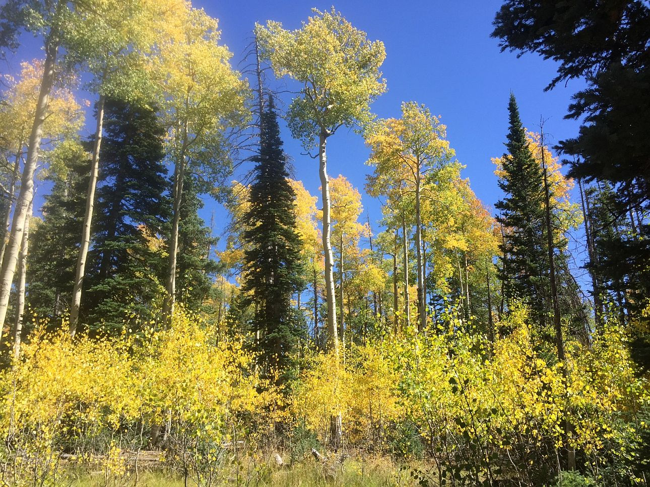 Forests Ranger Districts In Southern Utah Burst With