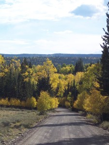 Autumn in the Dixie National Forest, Cedar City, Utah, undated | Photo courtesy Dixie National Forest, St. George News