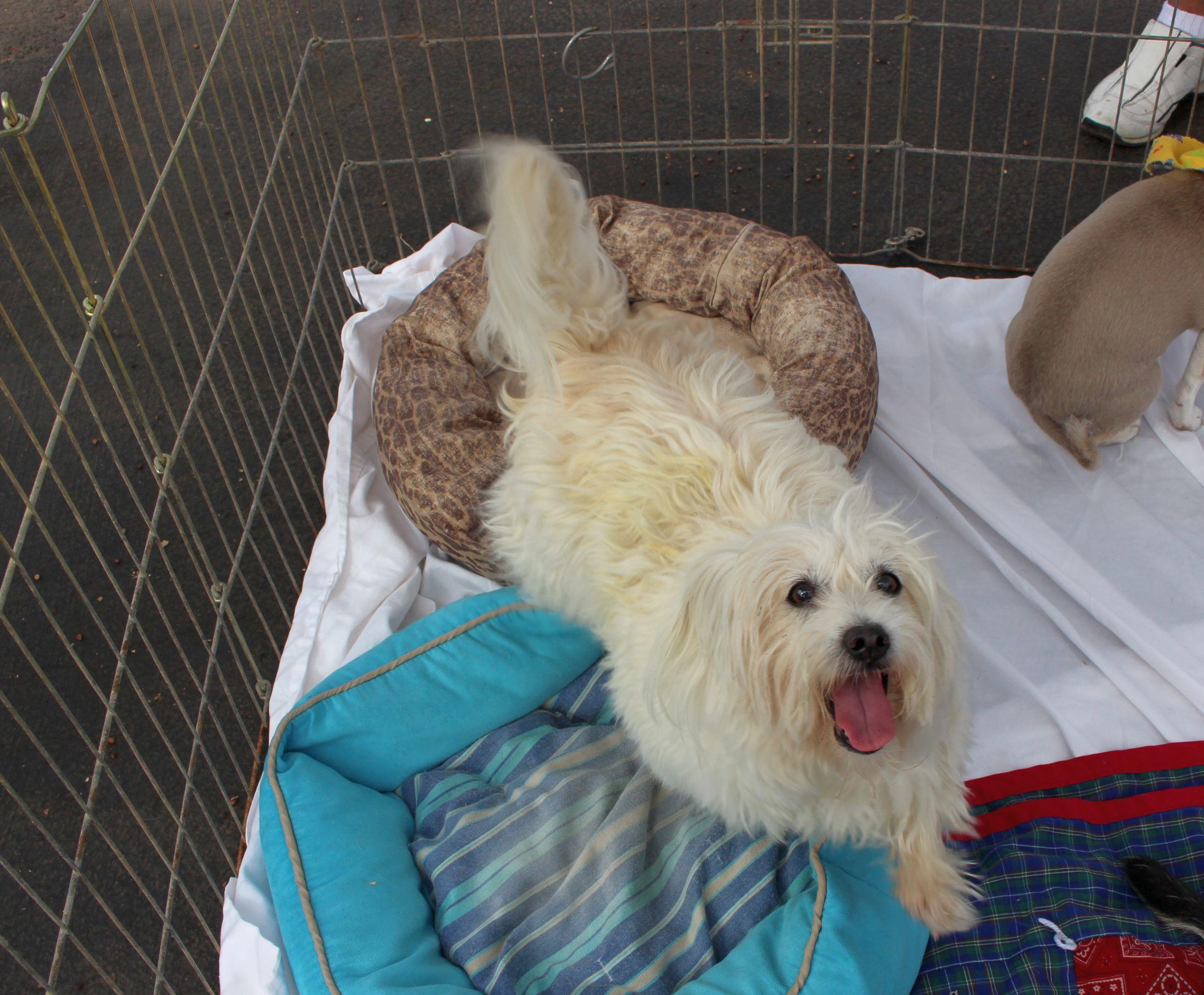 Pet Adoption Greenville Sc