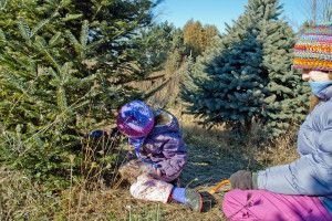 Mother and daughter start cutting the christmas tree they picked, Kolberg, Wisconsin, Dec. 7, 2013 | Photo by Dan Hatton, St. George News