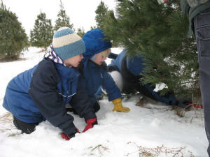 Young boys watch as their christmas tree is cut, location unspecified, Dec. 18, 2010 | Photo by Tricia J, St. George News