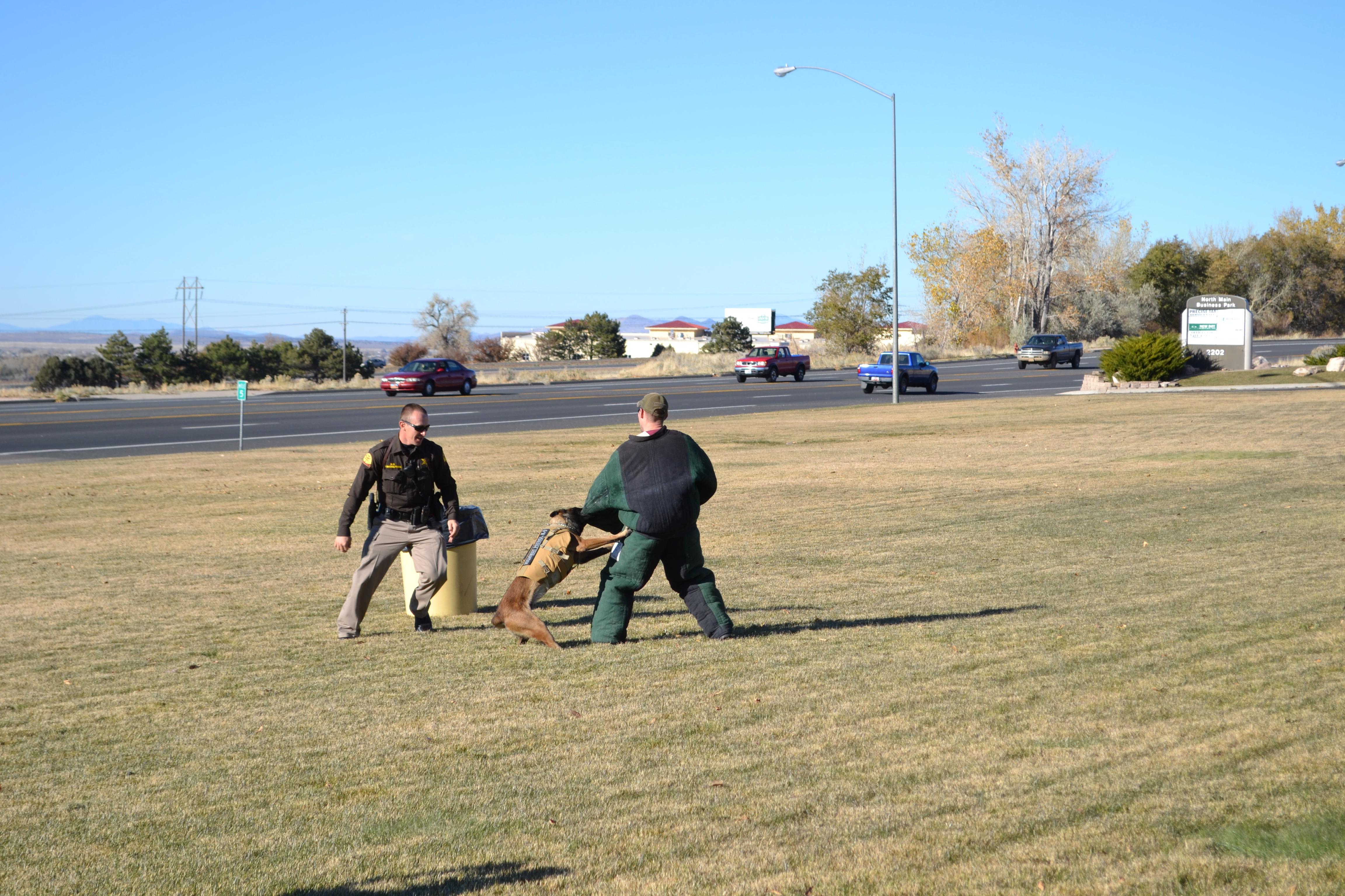 A police dog demonstrates training, Cedar City, Utah, Nov. 13, 2015 | Photo by Emily Hammer, St. George News