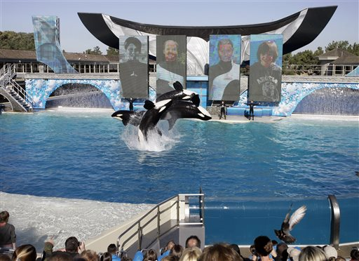 Seaworld says it will end orca shows in san diego st for Pool show orlando 2015