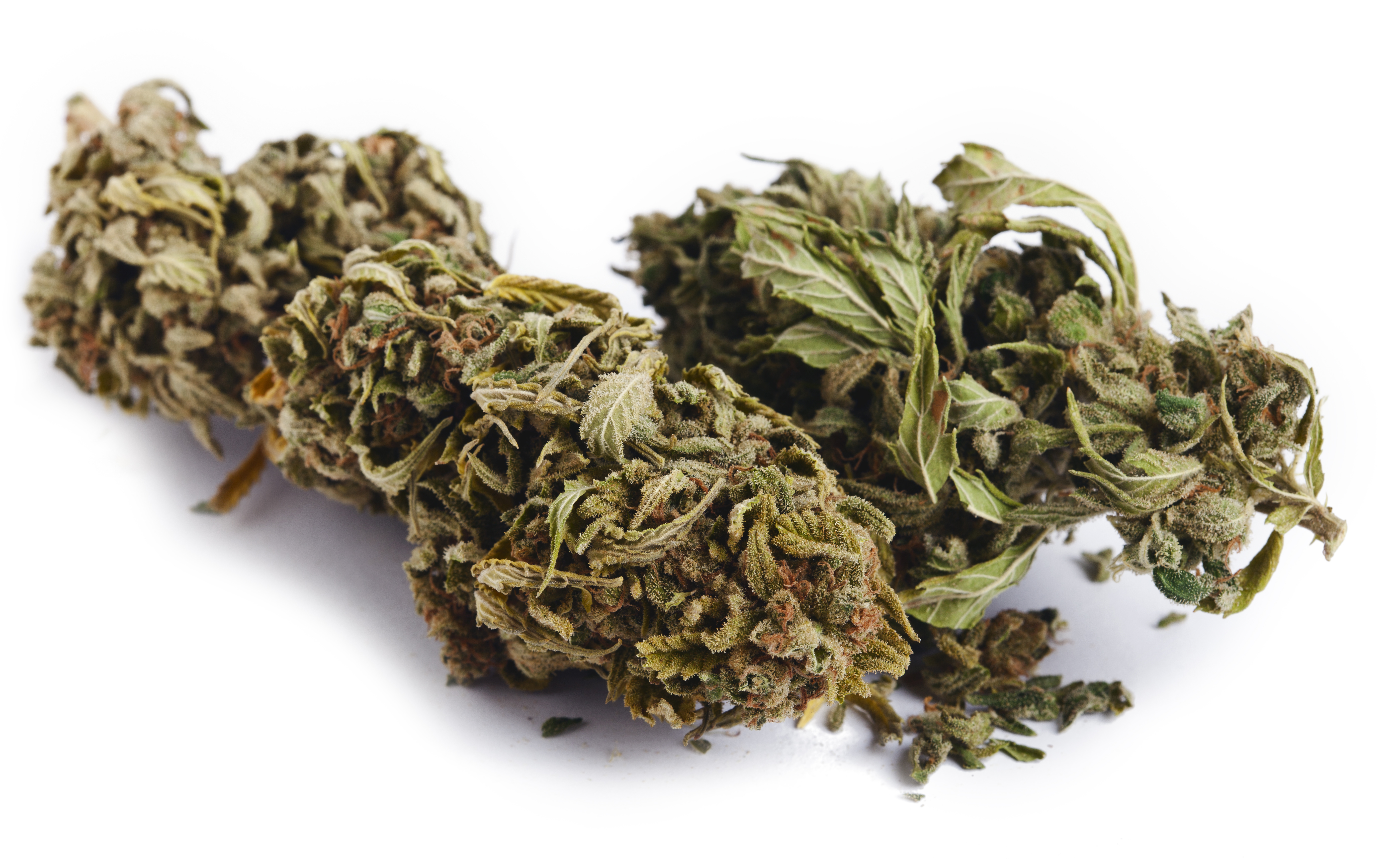 the link between cancer and marijuana should marijuana be legalized Research also shows a link between marijuana use and a  certain cancer cells, reduces the  interests' view that marijuana is safe they should make their.