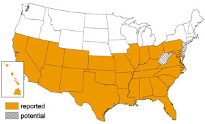 Triatomine Bug Occurrence by State | Image courtesy of the Center for Disease Control and Prevention, St. George News
