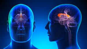 Male Corpus Callosum Brain Anatomy - blue concept