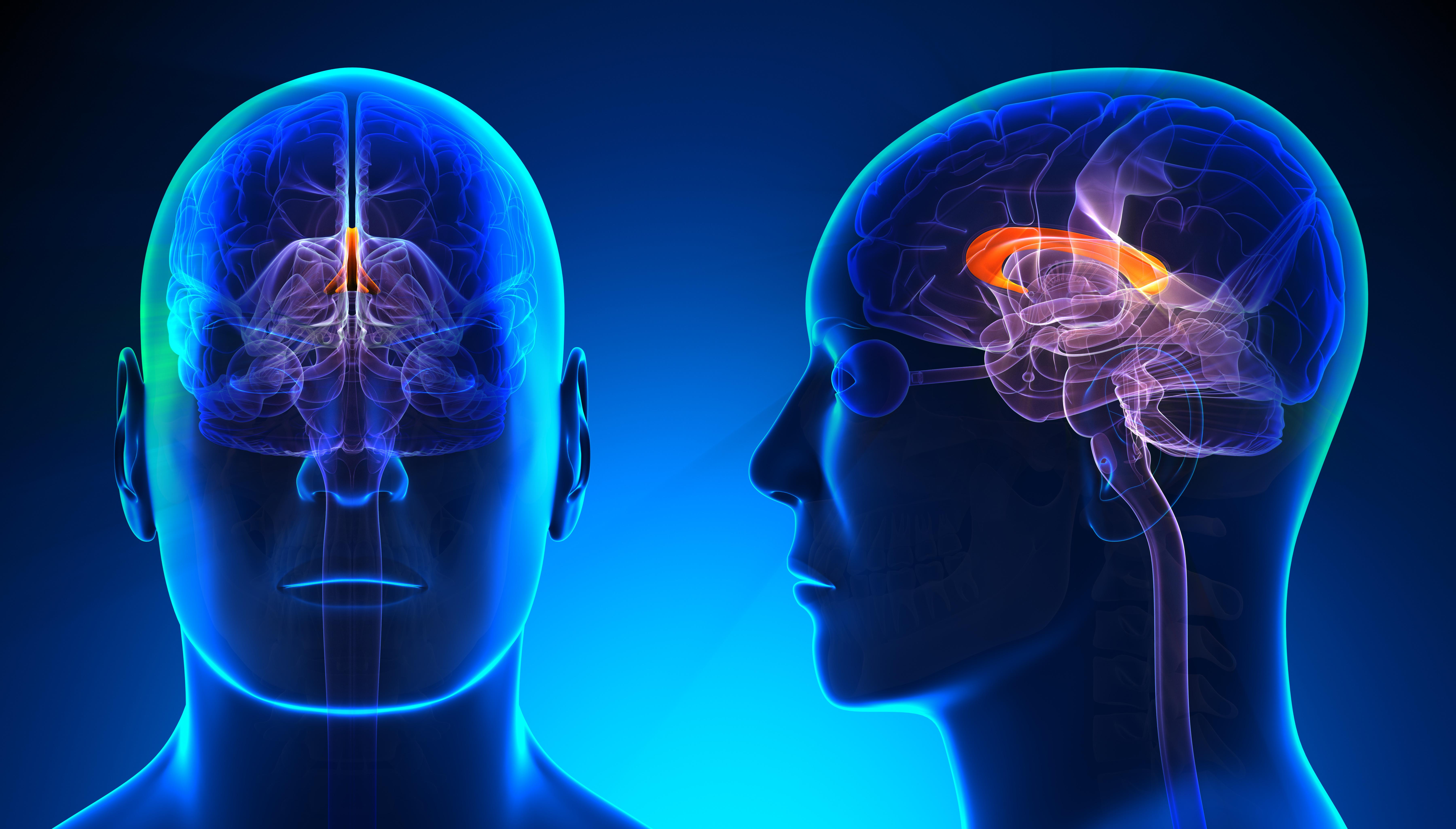 NHL Alumni to Study Medical Marijuana For Brain Injuries ...