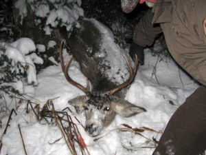 DWR officers have launched a massive patrol effort. Their goal? Protect mule deer on winter ranges in Utah, location and date unknown | Photo by Mitch Lane, courtesy of the Utah Division of Wildlife Resources, St. George News