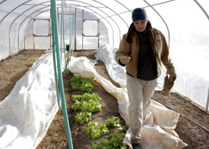 One of the greenhouses on the property where produce is still thriving in the middle of winter, Red Acre Farm CSA, Cedar City, Utah, Jan. 13, 2016 | Photo by Carin Miller, St. George News