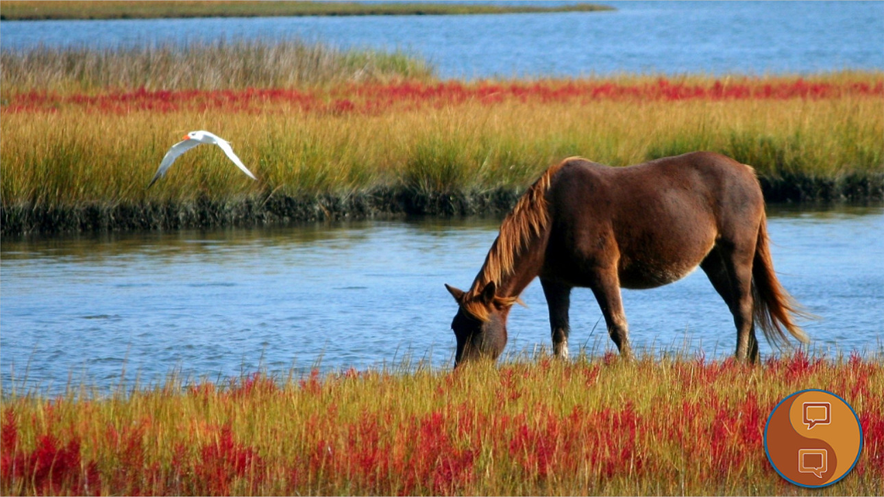 Wild horse at the water's edge, Oct. 4, 2012 | Photo courtesy James DeMers via Pixabay, St. George News
