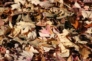 Decaying leaves, stock image | St. George News